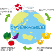 新潟 未来の食糧生産モデル!?水産養殖×水耕栽培=アクアポニックス
